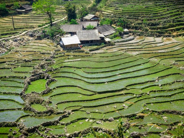 Sapa rice fields